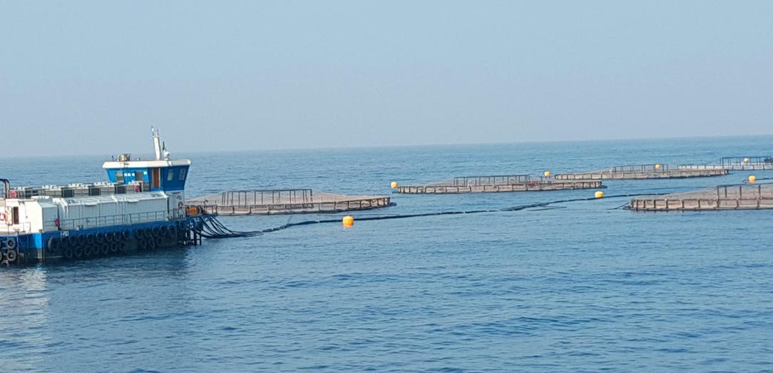 إنشاء شركة «أكواكو» لتطوير صناعة الاستزراع السمكي